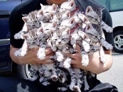 herding-kittens